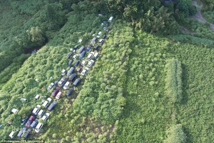 Unikátní záběry ukazují, jak si příroda dokázala poradit se zdevastovaným místem ve Fukušimě