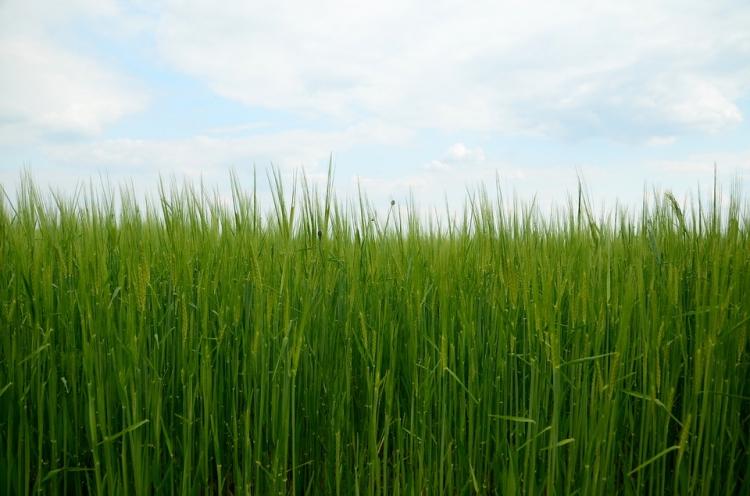 Češi dováží zeleninu za miliardy, zemědělci jsou nuceni pěstovat trávu. A ceny letí nahoru