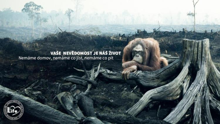 Naštvaný čtenář vyjádřil ostrý nesouhlas s používáním palmového oleje do potravin, stejně jako jeho způsob pěstování