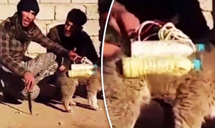 Islámský stát je zoufalý, posílá do boje psy opásané výbušninami