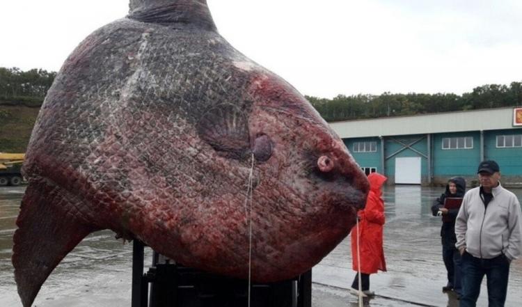 Ruští rybáři ulovili zvláštního tvora, pak udělali jednu nesmyslnou věc...