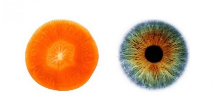 Příroda je dokonalá. 11 potravin léčí orgány v našem těle, kterým se silně podobají