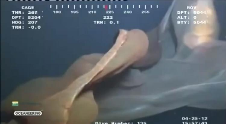 Kamera zachytila v oceánu neznámého tvora. Vědci si neví rady, o jakého živočicha se jedná