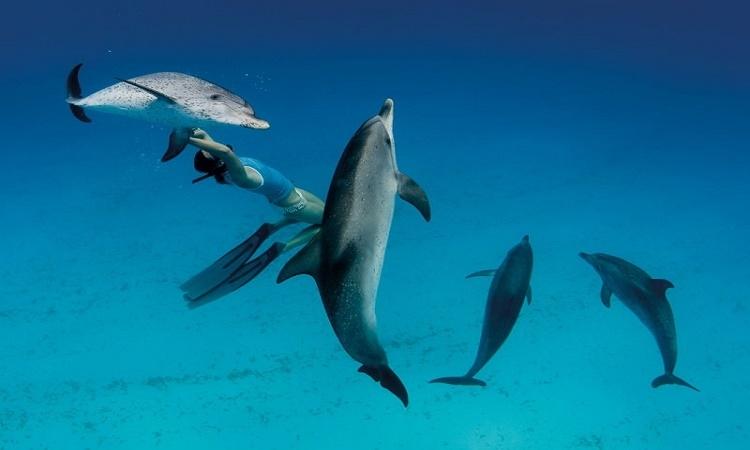 Lidé dekódovali delfíní řeč a užasli: nejsme sami!