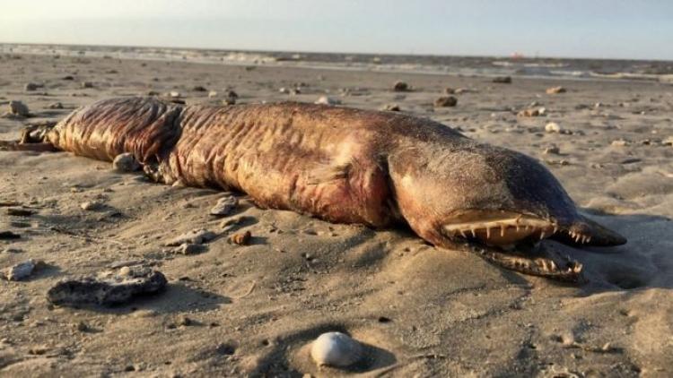 Moře vyvrhlo bizarního zubatého tvora na pláži nedaleko města Texas City