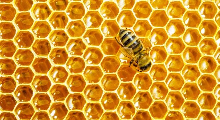 2000 let starý med z egyptských hrobek se dá jíst i dnes. Má věčnou trvanlivost