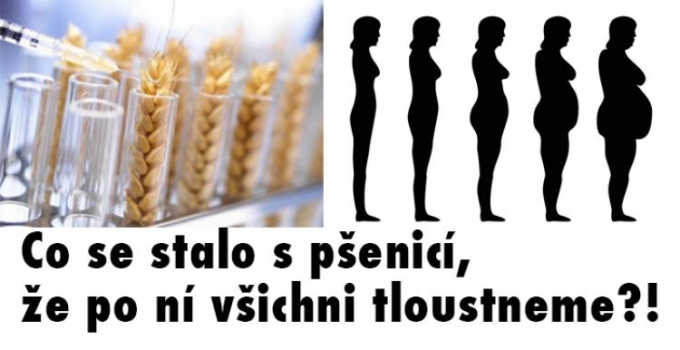 Co se stalo s pšenicí, že po ní všichni tloustneme?! Tato fakta je nutné připomínat...