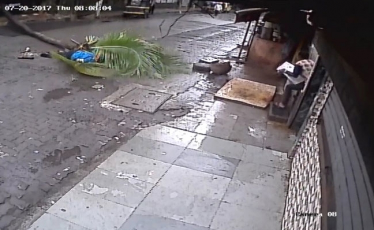 Žena žádala pokácení palmy, nyní na ni spadla a zabila ji