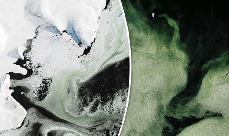 Vědci si prohlédli fotografie ze satelitu a zůstali v úžasu: Antarktida se mění na zelenou
