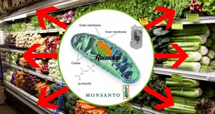 Studie ukazuje, že GMO jsou až 125 krát smrtelnější, než si kdokoliv dokázal představit