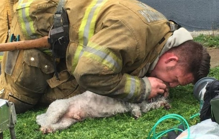 Hasič z hořícího domu vynesl mrtvého psa. O několik vteřin později všichni plakali dojetím