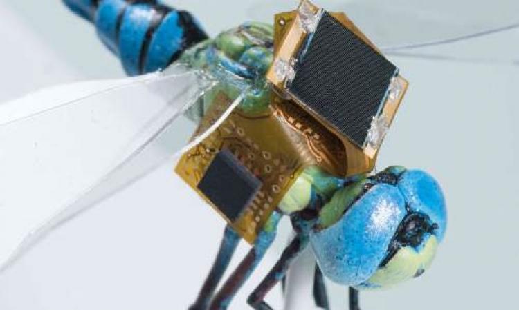První let živé, geneticky modifikované kybernetické vážky