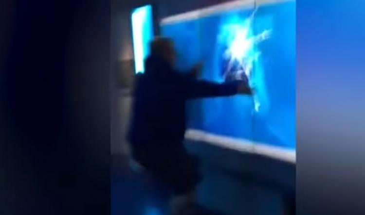 Návštěvník muzea zaklepal na nádrž se žralokem a nestačil se divit, co následovalo