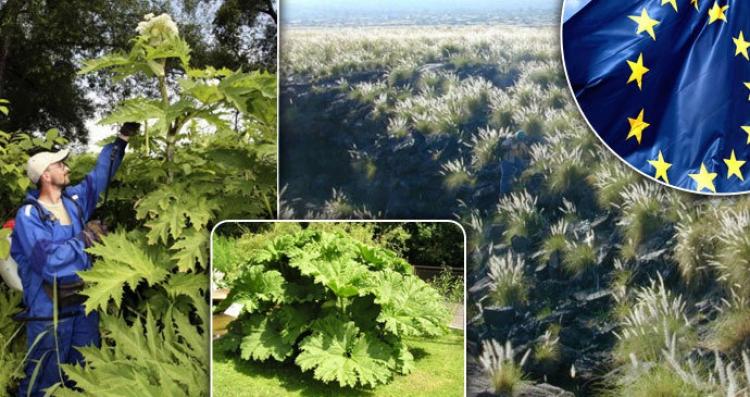 EU zakázala pěstování některých druhů rostlin, při porušení zákazu pokuta až 30 tisíc