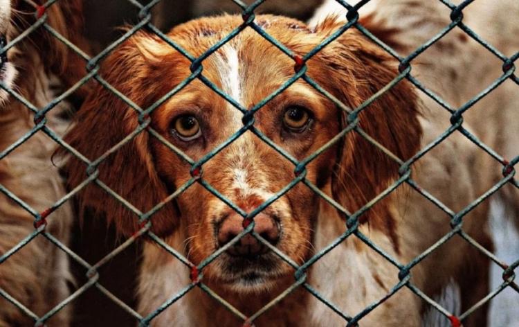 Zvíře už nemá být na Slovensku věc, mělo by mít stejná práva jako člověk